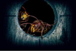 Insecticida para avispas